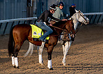 LOUISVILLE, KENTUCKY - APRIL 29: Omaha Beach, trained by Richard Mandella, gets a hug after exercising in preparation for the Kentucky Derby at Churchill Downs in Louisville, Kentucky on April 29, 2019. Scott Serio/Eclipse Sportswire/CSM