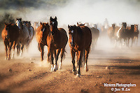 A photo of a cowboy herding horses. Cowboy Cowboy Photo Cowboy, Cowboy and Cowgirl photographs of western ranches working with horses and cattle by western cowboy photographer Jess Lee. Photographing ranches big and small in Wyoming,Montana,Idaho,Oregon,Colorado,Nevada,Arizona,Utah,New Mexico.