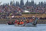 Canoe Journey, Paddle to Nisqually, 2016, Singing Coho canoe, Qualicum band, arriving in Olympia, Washington, 7-30-2016, Salish Sea, Puget Sound, Washington State, USA,