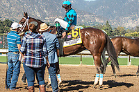 "ARCADIA, CA. OCTOBER 7: #6 Roy H, ridden by Kent Desormeaux after winning the Santa Anita Sprint Championship (Grade l)""Win and You're In Sprint Division"" on October 7, 2017, at Santa Anita Park in Arcadia, CA.(Photo by Casey Phillips/Eclipse Sportswire/Getty Images)"