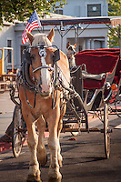 Horse and buggy rides at the Grand Canyon Railway Depot.<br /> <br /> The Grand Canyon Railway provides a unique rail Train excurion to the Grand Canyon from Route 66 in Williams Arizona.  Grand Canyon Railway made its first journey to the South Rim in 1901.
