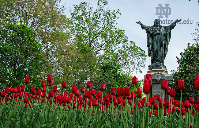 May 12, 2014; Sacred Heart of Jesus statue on Main Quad. Photo by Barbara Johnston/University of Notre Dame