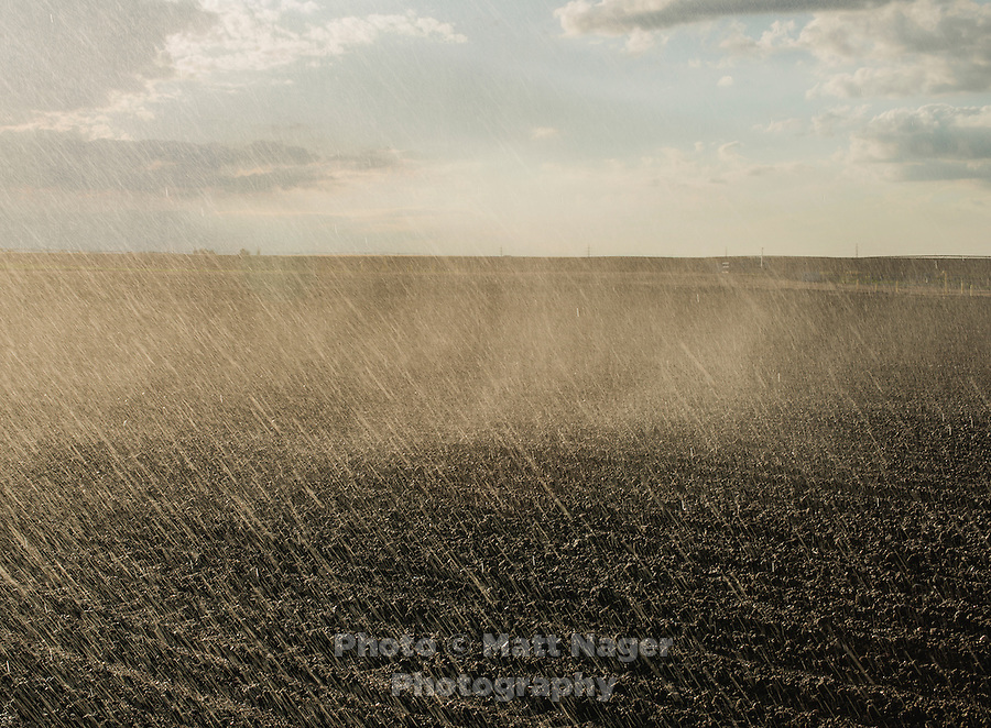 Central pivot irriagtion waters fields at Sakata Family Farms in Brighton, Colorado, Thursday, June 19, 2015. Sakata Family Farms grows onion, barley, broccoli, sweet corn and cabbage.<br /> <br /> Photo by Matt Nager