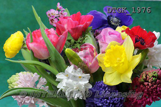 Gisela, FLOWERS, BLUMEN, FLORES, photos+++++,DTGK1976,#f#