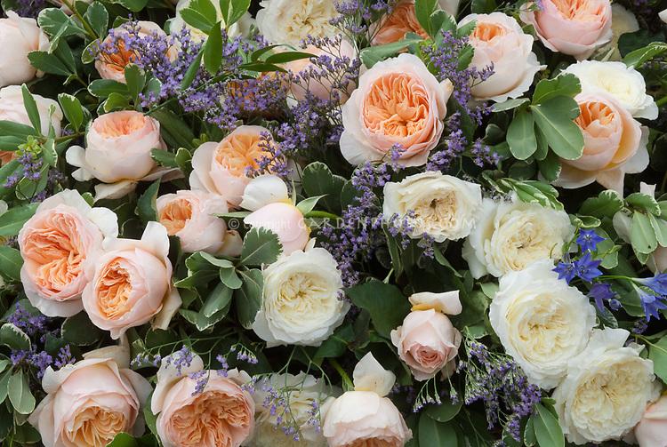 Mixed pastel roses Rosa in peach orange salmon tones and creamy white, English roses