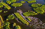 Pictured: Farmers guide hundreds of ducks through a river to return home.<br /> <br /> The workers, using their boats, herd the ducks to their farm in order to feed them as one farmer stands in the water to guide them in the correct direction.<br /> <br /> Photographer Trung Pham Huy used a drone to picture the ducks on the Truong Giang River near Hoi An, Vietnam.  SEE OUR COPY FOR FULL DETAILS.<br /> <br /> Please byline: Trung Pham Huy/Solent News<br /> <br /> © Trung Pham Huy/Solent News & Photo Agency<br /> UK +44 (0) 2380 458800