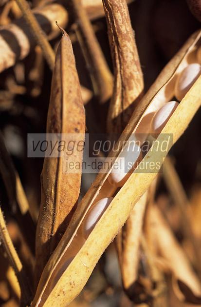 Europe/France/Bretagne/22/Côtes d'Armor/Paimpol: Haricot sec - AOC coco de paimpol