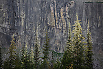 Sunshine highlights trees in front of the Chinese Wall in the Bob Marshall Wilderness in Montana