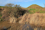 Silbury Hill from Swallowhead  Springs ancient sacred site, River Kennet, Wiltshire, England, UK