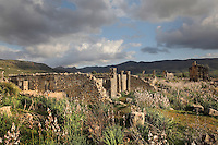Rear section of the House of the Columns, with the Triumphal Arch of Caracalla and Basilica in the distance, Volubilis, Northern Morocco. Volubilis was founded in the 3rd century BC by the Phoenicians and was a Roman settlement from the 1st century AD. Volubilis was a thriving Roman olive growing town until 280 AD and was settled until the 11th century. The buildings were largely destroyed by an earthquake in the 18th century and have since been excavated and partly restored. Volubilis was listed as a UNESCO World Heritage Site in 1997. Picture by Manuel Cohen