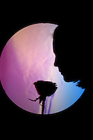 A schlieren image of a girl smelling a rose.  To increase the visualization of air flow around the rose, and show how smells are transported in the air - the rose was misted with pure alcohol.   The schlieren image identifies areas of different index of refraction.