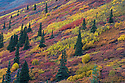 Fall in the Ogilvie Mountains near the Dempster Highway in northern Yukon; red color are the leaves of dwarf birches