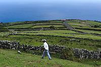 Weiden auf der Insel Corvo, Azoren, Portugal