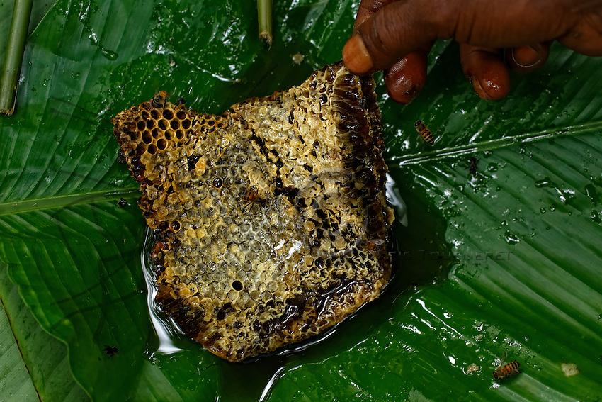 "A ""Bouy"", honeycomb, brought back to the camp in a leaf.///Une galette de miel « Bouy » rapportée au campement dans une feuille."