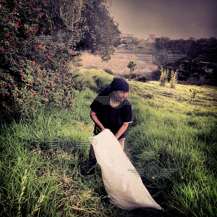 Luz Alquinga collects grass from a field, soon to be sold to developers.
