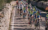 Kenny Dehaes (BEL/WB Aqua Protect - Veranclassic)<br /> <br /> 27th Challenge Ciclista Mallorca 2018<br /> Trofeo Campos-Porreres-Felanitx-Ses Salines: 176km