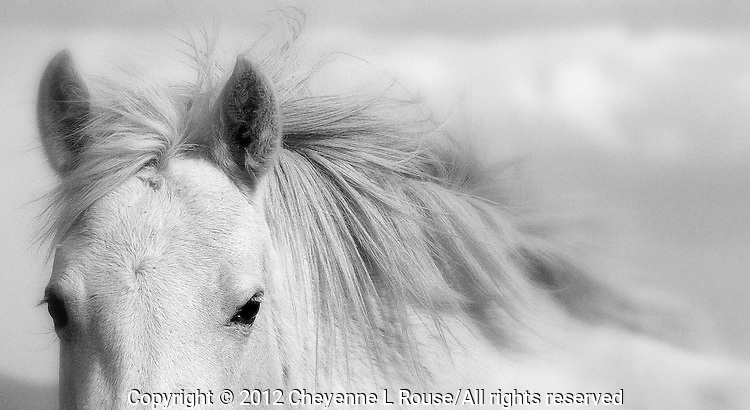 Rescued mustang on the Monero Mustang Sanctuary in Tierra Amarillas New Mexico - they roam free on 5,000 acres.<br />