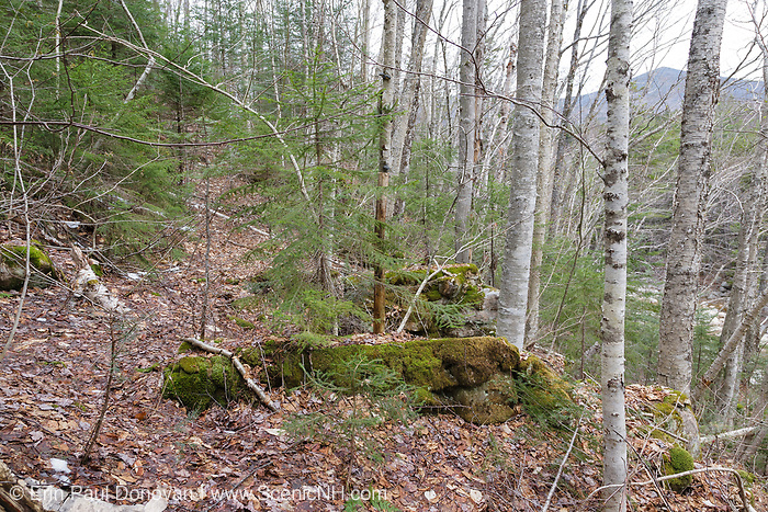 Remnants of an old trestle along the abandoned East Branch & Lincoln Railroad (1893-1948), near camp 18, in the Pemigewasset Wilderness of Lincoln, New Hampshire. This trestle was used to cross a steep hillside that was along the railroad.