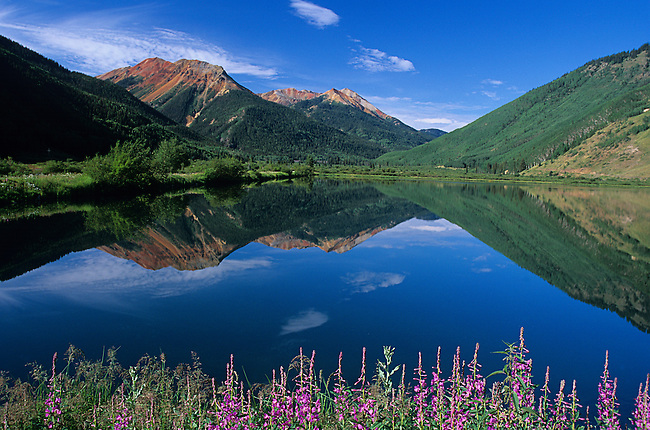 Fireweed, Crystal Lake, Red Mountain Pass, Colorado