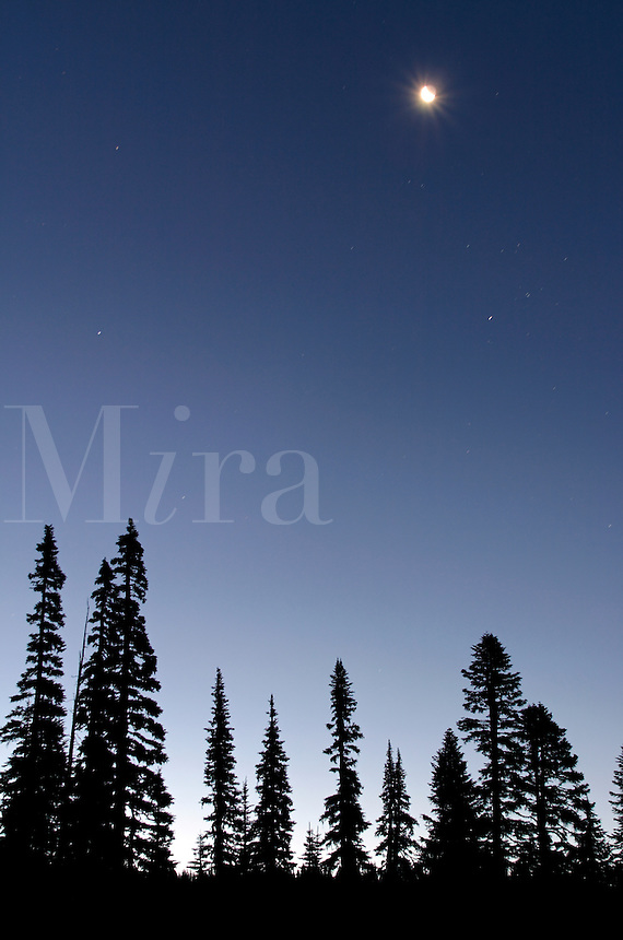 Moon and stars in deep blue sky above silhouetted subalpine fir, Mount Rainier National Park, Lewis County, Cascade Mountains, Washington, US