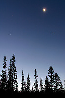 Moon and stars in deep blue sky above silhouetted subalpine fir, Mount Rainier National Park, Lewis County, Cascade Mountains, Washington, US