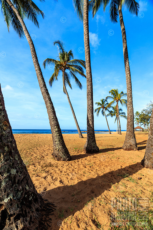 Coconut palm trees on a sandy beach at Salt Pond Beach Park, Hanapepe, south shore of Kaua'i.