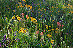 San Juan National Forest, Colorado: Detial of sunlight on a meadow of alpine wildflowers