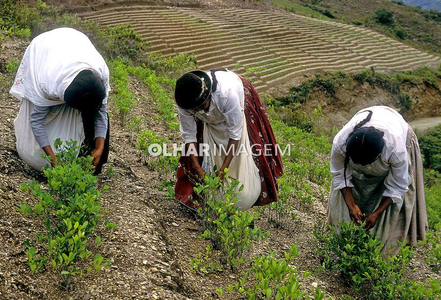 Plantação de coca. Bolivia. 2002. Foto de Ricardo Azoury.