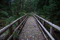 Wooden Footbridge Over Marten Creek, Taylor River Road, Mt. Baker Snoqualmie National Forest, Washington, US