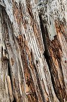 Old log at Olympic NP, Washington