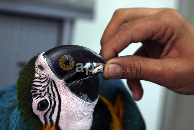A Palestinian vendor displays different types of birds at his shop in the West Bank town of Ramallah,  Monday, Nov. 1, 2010. Photo by Issam Rimawi