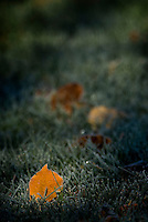 Morning frost settles on leaves fallen from trees<br />