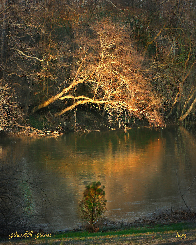 A tree is highlighted over the schuylkill river
