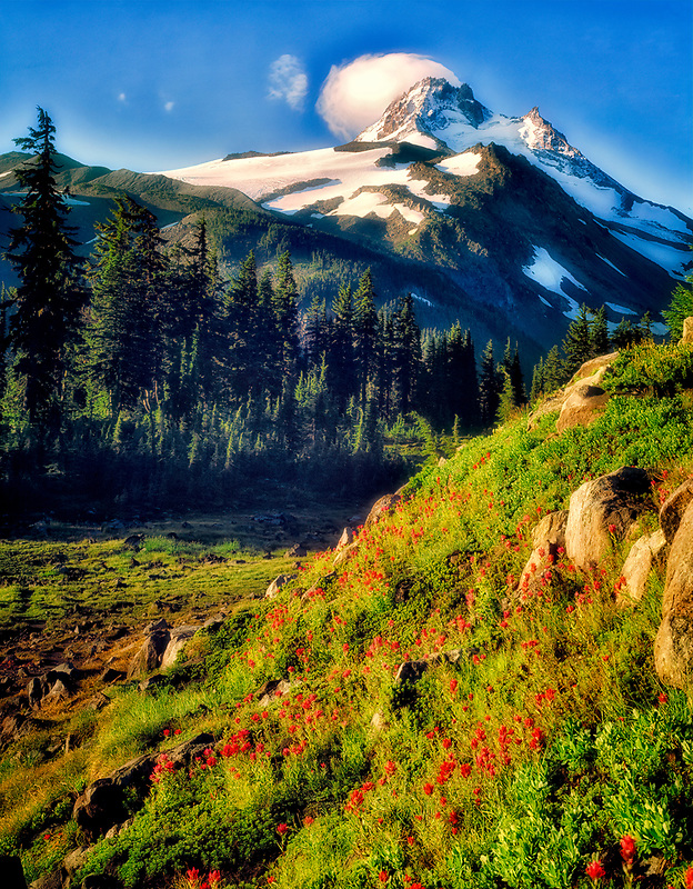 Mt. Jefferson and reflection with Indian Paintbrush. Oregon.