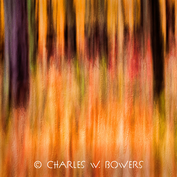 Color in motion in the fall woods. <br />