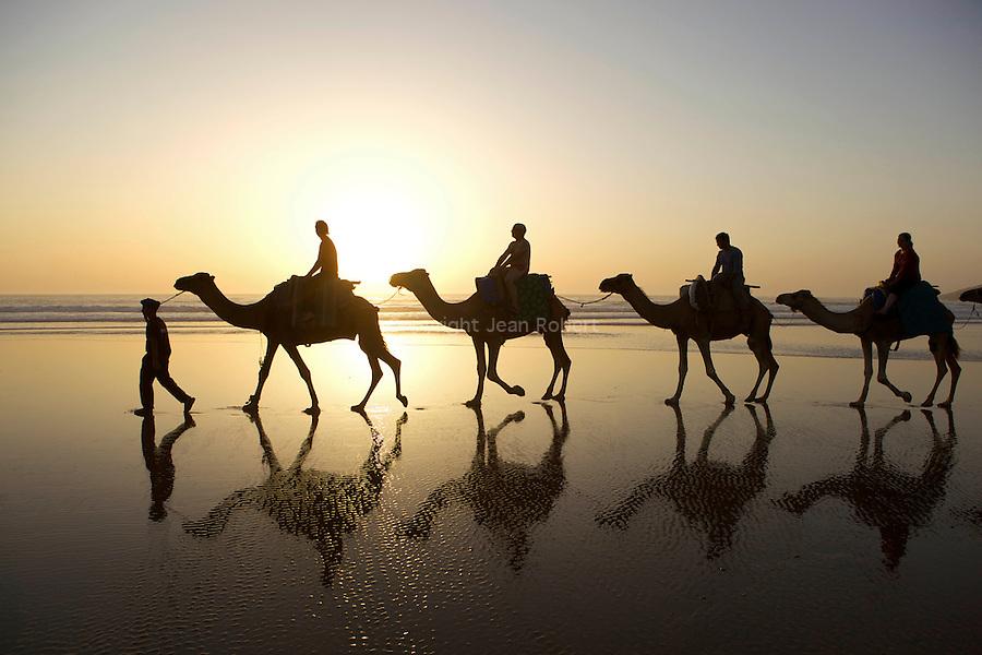 randonnée sur la cote atlantique maroc.Dromadaires au coucher du soleil a  Sidi Ahmed Assayh, l'une des plus belles plages de la région.