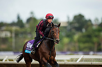 DEL MAR, CA - NOVEMBER 02:  Mendelssohn, owned by Derrick Smith, Mrs. John Magnier & Michael Tabor and trained by Aidan P. O'Brien, exercises in preparation for Sentient Jet Breeders' Cup Juvenile at Del Mar Thoroughbred Club on November 02, 2017 in Del Mar, California. (Photo by Alex Evers/Eclipse Sportswire/Breeders Cup)