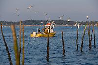 Europe/France/Aquitaine/33/Gironde/Bassin d'Arcachon: bateau de pèche aux anguilles sur le Bassin à l'aube