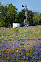 A windmill in a field of wildflowers in the Texas Hill Country near Fredericksburg Texas.   Bluebonnets, the official Texas state flower, blanket large portions of the state in early spring. Their peak blooming season is in late March and early April. Bluebonnets depend on abundant winter rains and warm spring weather.