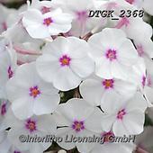 Gisela, FLOWERS, BLUMEN, FLORES, photos+++++,DTGK2368,#f#, EVERYDAY ,portrait