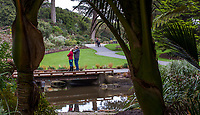Visitors admiring McBean Wildfowl Pond  seen  from New Zealand section framed by Rhopalostylis sapida, Nikau Palm trees in San Francisco Botanical Garden