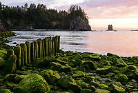 Dusk, Olympic National Park, Washington