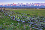 Grand Teton National Park, WY: Sunrise on the Teton Range with weathered fence and spring wildflowers in the foreground