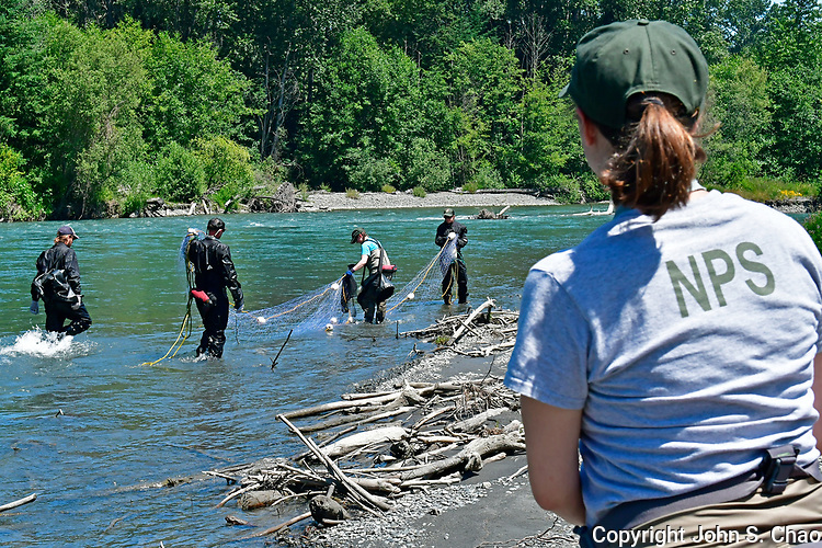 National Park Service Fisheries scientists handling drift net on Lower Elwha River, Olympic Peninsula, Washington State