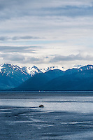 Small commercial fishing boat, Chichagof Island, Icy Strait, Alaska, USA