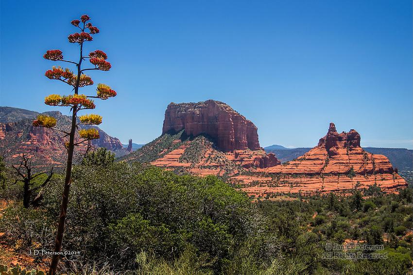 Century Plant along Hiline Trail, Sedona, Arizona
