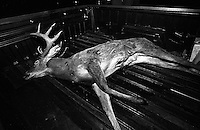 Hunting the Hunted. This buck deer was taken from southern Texas.  Hunting in Texas is a popular pastime. near Freer, Texas, USA. December 2003, © Stephen Blake Farrington