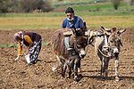 Pictured: Farmers using traditional methods of farming cover their faces during the coronavirus pandemic in Eastern Anatolia Region, Turkey. Farmers ploughing a field with a pair of donkeys are having to continue to work through while wearing face masks for some protection.<br /> <br /> The streets have been a forbidden place for people to venture out during lockdown rules, but farmers have been grainted special permission to continue their daily duties. <br /> <br /> Please byline: Seyit Konyali/Solent News<br /> <br /> © Seyit Konyali/Solent News & Photo Agency<br /> UK +44 (0) 2380 458800