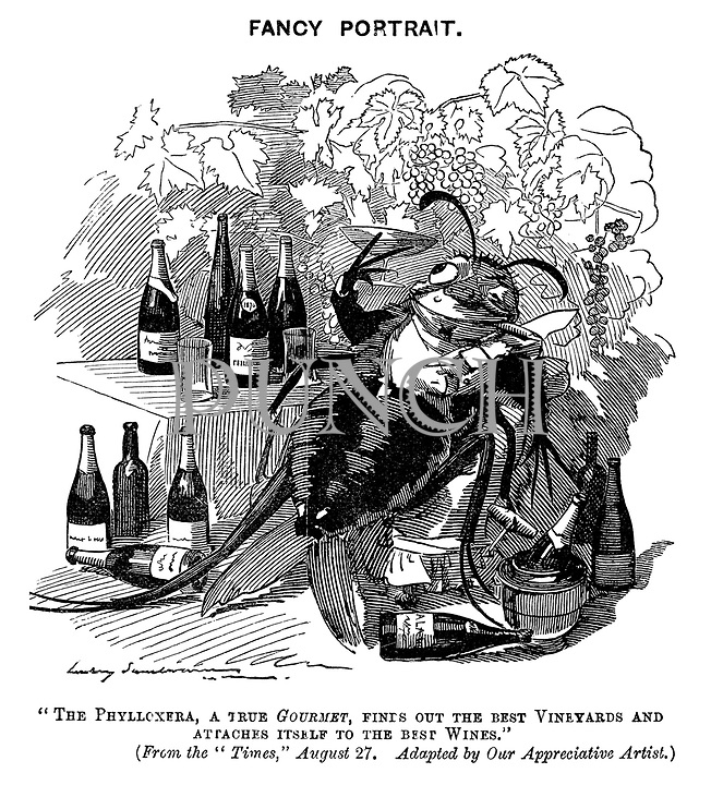 "Fancy Portrait. ""The Phylloxera, a true gourmet, finds out the best vineyards and attaches itself to the best wines."" (From the ""Times,"" August 27. Adapted by our appreciative artist.)"
