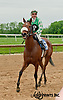 Missy Rules winning The Our Mims Stakes at Delaware Park on 5/18/13